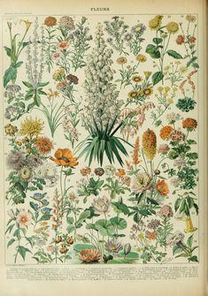 Nouveau Larousse illustré : Fleurs