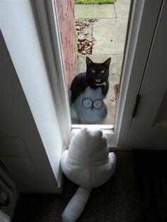 Simon's Cat - Who???