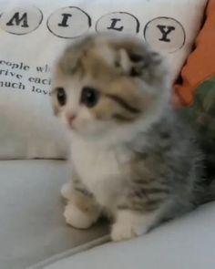 Cute Cat Names, Funny Cute Cats, Cute Cat Gif, Cute Cats And Kittens, Cute Funny Animals, Kittens Cutest, Baby Cats, Black Kittens, Ragdoll Kittens