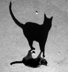 BIG shadow......