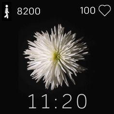 🏵 White Flower 🏵 This is a minimalistic Fitbit Clockface available for Versa, Versa Lite and Versa 2! This clockface displays: - Time - Steps - Heart rate