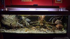 Der User Didi stellt sein Aquarium Cameroon beauties / Nur noch Beispiel / (West-/Zentralafrika) mit den Abmessungen 200 x 80 x 60 (960 Liter) mit 43 Bil...