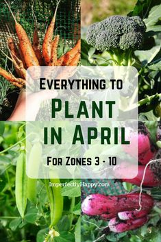 Everything to Plant in April by Zone Everything you can plant in your garden for spring and summer harvests Vegetables fruits and herbs by garden zone Zones 3 10 include. Garden Types, Garden Yard Ideas, Lawn And Garden, Garden Layouts, Terrace Garden, Indoor Garden, Gardening For Beginners, Gardening Tips, Gardening Gloves