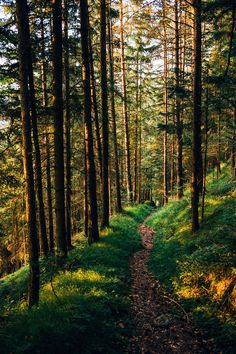 Late afternoon sun on a forest trail (Austria) by Roman Königshofer