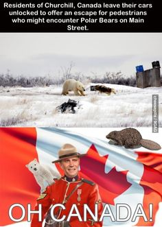 Funny pictures about Things that only happen in Canada. Oh, and cool pics about Things that only happen in Canada. Also, Things that only happen in Canada. Canadian Memes, Canadian Things, I Am Canadian, Canadian Humour, Canadian Facts, Canadian Culture, Canada Funny, Canada Eh, Canada Jokes