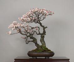 Omoi-no-mama, Omiya Bonsai Art Museum.