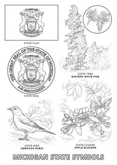 Indiana State Symbols Coloring page  Geography  Pinterest