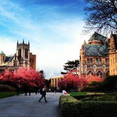 University of Washington Seattle. So beautiful! I miss my campus!