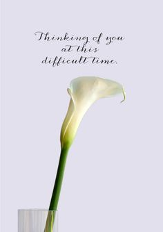 Calla lily is a sympathy card featuring a white Calla Lily in a glass vase and text 'Thinking Of You At This Difficult Time' Thinking Of You Quotes Sympathy, Thinking Of You Quotes For Him, Sympathy Cards, Greeting Cards, Difficult Times Quotes, Get Well Wishes, Time Quotes, Calla Lily, Be Yourself Quotes