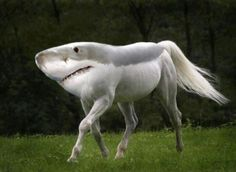 @Maddison Ann Smith, this reminds me of your shark costume