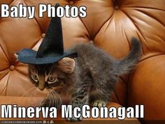 These Harry Potter memes really piss me off... They are rarely accurate to the story. This couldn't possibly be a baby photo of Minerva seeing as witches and wizards don't go to school until they are 11 AND can't use magic outside of school. Transfiguration is a form of magic people! One obviously difficult to master seeing as we don't see many witches or wizards using it in Harry Potter