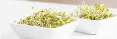 Liver Detox 101: Broccoli Sprouts :http://www.perfect-supplements.com/blog/7939/liver-detox-101-broccoli-sprouts/