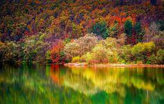 Ősz - ősz, tükröződés, természet, fák