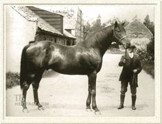 Swynford(1907)(Colt) John O'Gaunt- Canterbury Pilgrim By Tristan. 3x5 To Stockwell. Foundation Mare Canterbury Pilgrim Is His Dam. 12 Starts 8 Wins 1 Second 1 Third. Won St Leger(Eng), Eclipse S(Eng), Hardwicke S(Eng)Twice, Princess Of Wales's S(Eng). Leading Sire In England And Ireland In 1923 & Leading Broodmare Sire In 1932. Sire Of Six Different English Classic Winners Which Includes 4 Fillies.