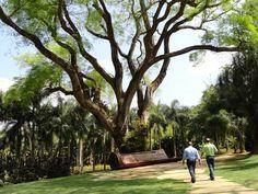 Big Beautiful Tree and bench - Inhotim Museum (Belo Horizonte - Minas Gerais - Brazil)