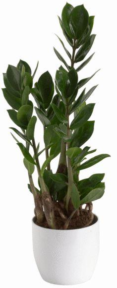 Nämä kahdeksan kasvia kestävät kosteuden vaihteluja ja kaipaavat vain satunnaista lannoitusta.