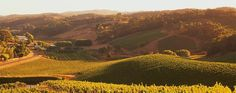 Think wine is just a simple beverage? Find out the many exiciting things you could do with wine. Go on make your wine experience better than ever before! Wine Guide, Wine And Spirits, South Australia, Wine Making, Wine Recipes, Grape Vines, Wines, Vineyard, Tours