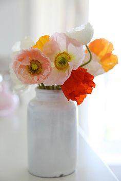 Google Image Result for http://4.bp.blogspot.com/-ZHY43ZjLPRw/TWdID1Ga8nI/AAAAAAAAFAw/hFBmuXErL2Q/s1600/poppies.jpg