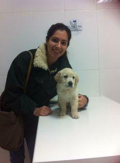 Enzo, este golden doradito nos saluda con su dueña Rebeca, viene a su primera visita en la clinica.