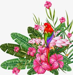 Tropical plant material PNG and Vector
