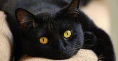 gatos pretos - Pesquisa Google