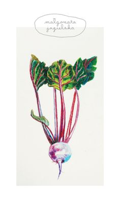 #beet #illustration