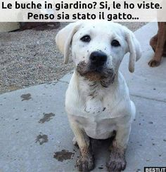 These hilariously messy dogs just couldn't help themselves from diving into fun mud puddles. Animals And Pets, Funny Animals, Cute Animals, I Love Dogs, Cute Dogs, Funny Images, Funny Pictures, Sushi Cat, Funny Scenes