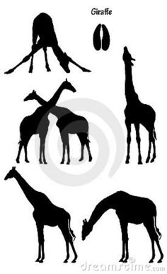 Giraffe In Silhouette Stock Images - Image: 7679414