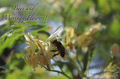 Moringa & Bees
