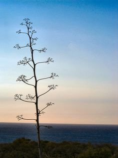 An anorexic Dr. Steuss tree.  Love the view!
