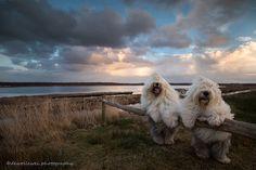 Ces deux chiennes inséparables sont soeurs et vivent d'incroyables aventures | Daily Geek Show