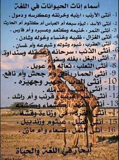 أسماء إناث الحيوانات في اللغة العربية