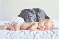 dog and baby if the dog will stay still enough