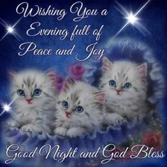 Wishing You A Evening Full Of Peace And Joy good night good evening good night wishes good night greetings Good Night Cat, Good Night Sister, Good Night Prayer, Cute Good Night, Good Night Friends, Good Night Blessings, Night Love, Good Night Sweet Dreams, Good Night Image