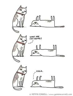 That is a lazy yoga move for cats only
