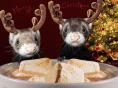 reindeer ferrets - of course marshmallows and hot chocolate are NOT good for ferrets to eat.