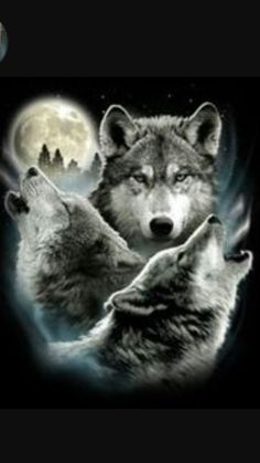 Funny Animal T-Shirt Three Wolf Moon 3 Wolves Howling Tee Design is printed. Funny Animal T-Shirt Three Wolf Moon 3 Wolves Howling Tee Design is printed. Wolf Images, Wolf Photos, Wolf Pictures, Three Wolf Moon, Wolf Tattoo Design, Wolf Tattoos, Wolf And Moon Tattoo, Wolf Howling At Moon, Wolf Spirit Animal