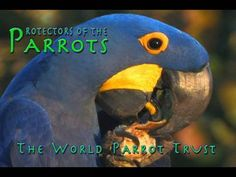 Protectors of the Parrots - World Parrot Trust - YouTube
