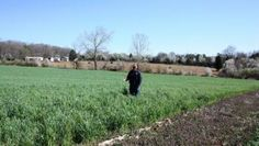 North Carolina farmer Russell Hedrick gets the max from cover crop mix http://southeastfarmpress.com/grains/north-carolina-farmer-russell-hedrick-gets-max-cover-crop-mix