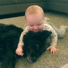 I dag e pøbelfisen min 9 mnd! #baby#babyboy#boy#boys#kid#kids#love#life#play#dog#dogsofinstagram#babiesofinstagram#babies#mommylife#mom#familylife#hustandclaire#playtime#adorable#cute#friends#friendship#bigboynow#christmas#christmastime@littleandbrave
