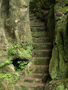entrance to a fairy landscape , the stairs to the ancient riverndell elfish city or the staircase to sleeping beauty and her fairytale happy ending , there is magic here grimm and fairy photo art to inspire to dream Stairway To Heaven, The Secret Garden, Secret Gardens, Garden Paths, Moss Garden, Abandoned Places, Pathways, Belle Photo, Stairways