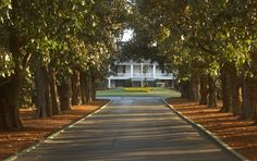 Magnolia Lane at Augusta National. The Magnolia trees date back to the 1850's and were planted by the Berckmans.
