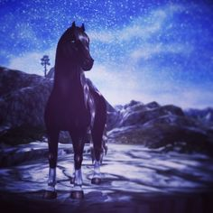 Video Game Show, Video Games, Star Stable Horses, Horse Videos, Star Wars, Online Drawing, Stables, Cattle, Funny Cats