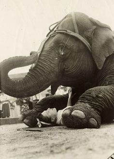 Circus Barnum & Baily,olifantenact 1940   Flickr – Compartilhamento de fotos!