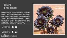 【圖鑑】150種常見多肉植物圖鑑+多肉植物常見問題解答