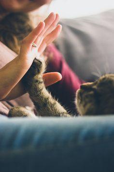 animal energy healing courses