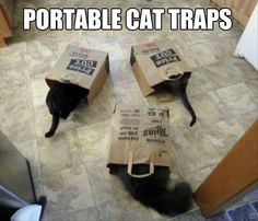 Portable cat traps are really useful...