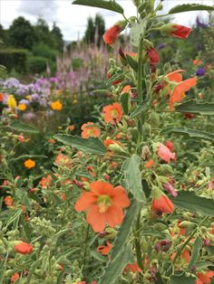 Marchants nursery & garden, Sussex