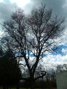 silhouette of tree in back