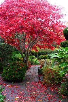 The Japanese garden Calderstones Park - garden paths Beautiful Landscapes, Beautiful Gardens, Amazing Gardens, Garden Paths, Garden Landscaping, Landscaping Ideas, Jardin Decor, Garden Pictures, Parcs